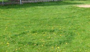 Lawn Disease Treatment