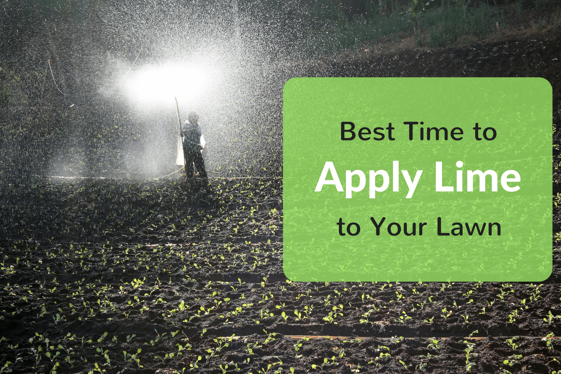 Best Time to Apply Lime to Your Lawn