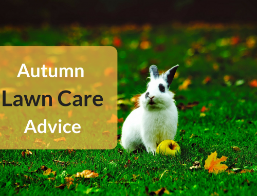 Autumn Lawn Care Advice