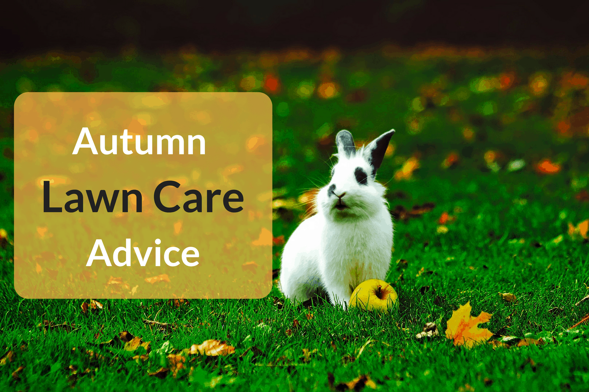 Autumn Lawn Care Advice