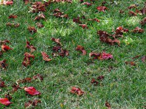 Types Lawn Grass