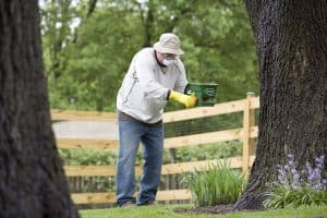 spring lawn care maintenance