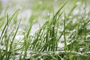 Lawn Treatment Bedfordshire