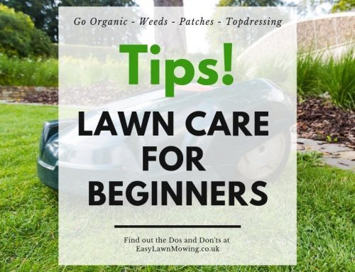Lawn Care for Beginners – More Tips!!