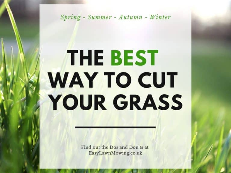 Best Way to Cut Your Lawn