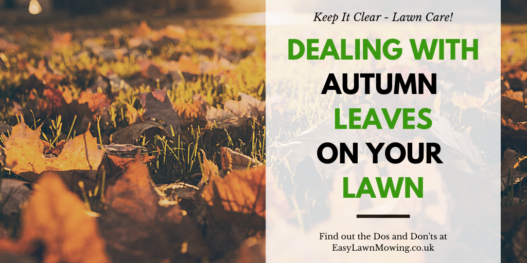 Dealing With Autumn Leaves on Your Lawn