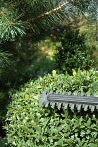 Petrol Hedge Trimmer Review