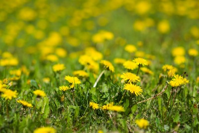Mulching Weeds