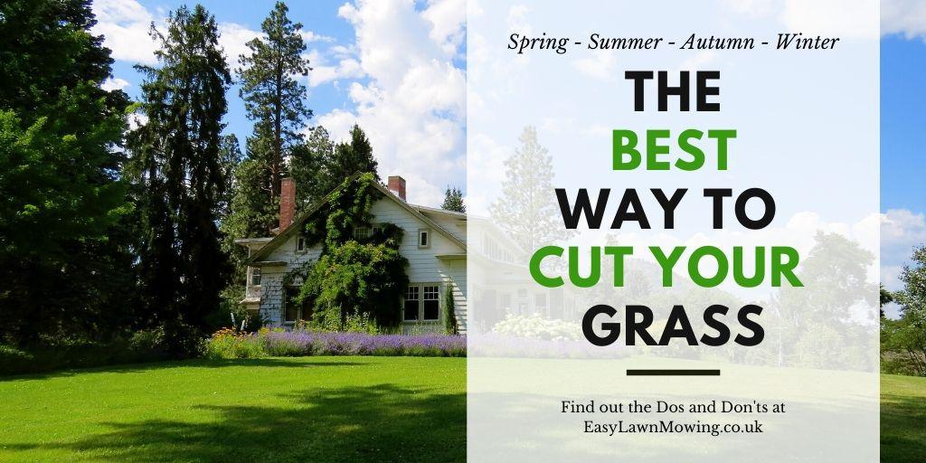 Best Way To Cut Your Grass