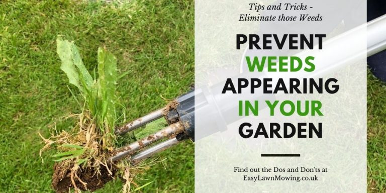 How to Prevent Weeds Appearing in Your Garden