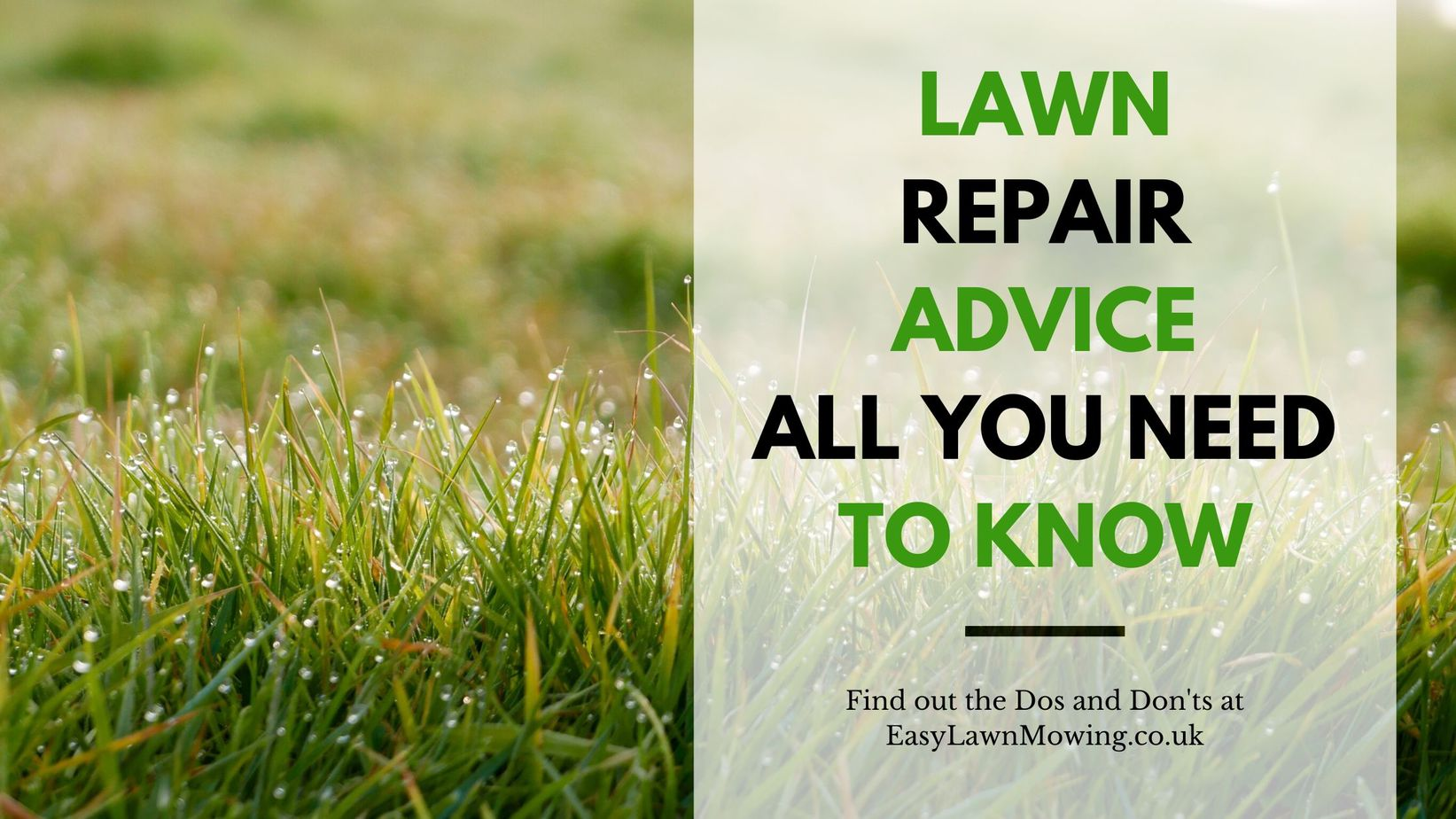 Lawn Repair Advice