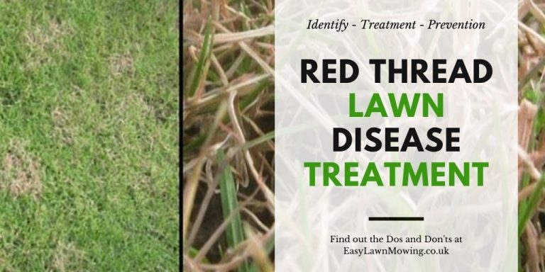 Red Thread Disease