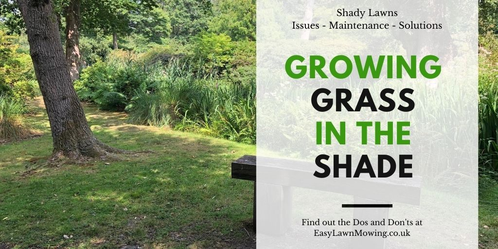 Growing Grass in the Shade