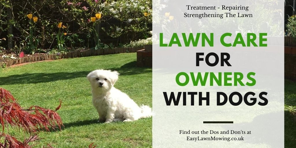 Lawn Care with your Dogs