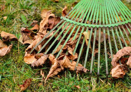 Autumn Lawn Care Advice Raking Leaves