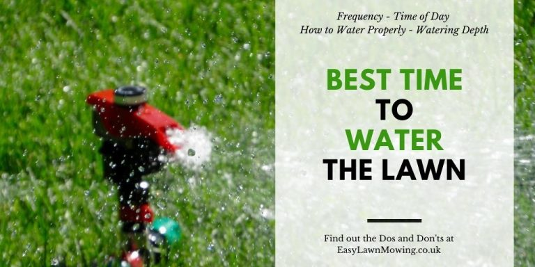 Best Time to Water the Lawn