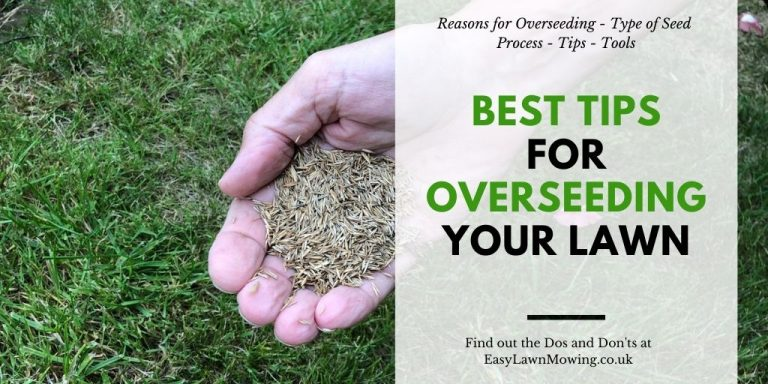 Best Tips For Overseeding Your Lawn