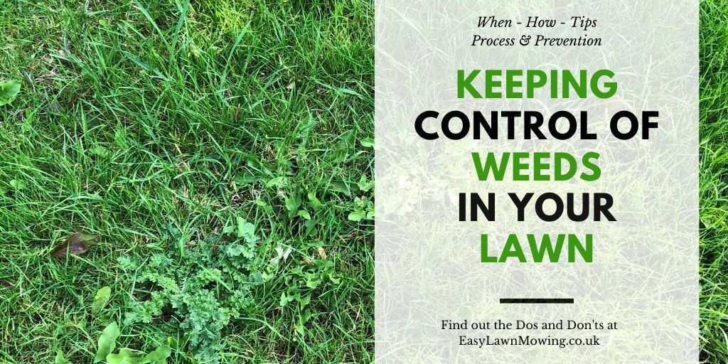 Keeping Control of Weeds in Your Lawn