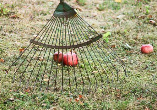 Lawn Moss Removal Rake