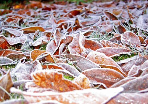 Winter Lawn Maintenance Leaves