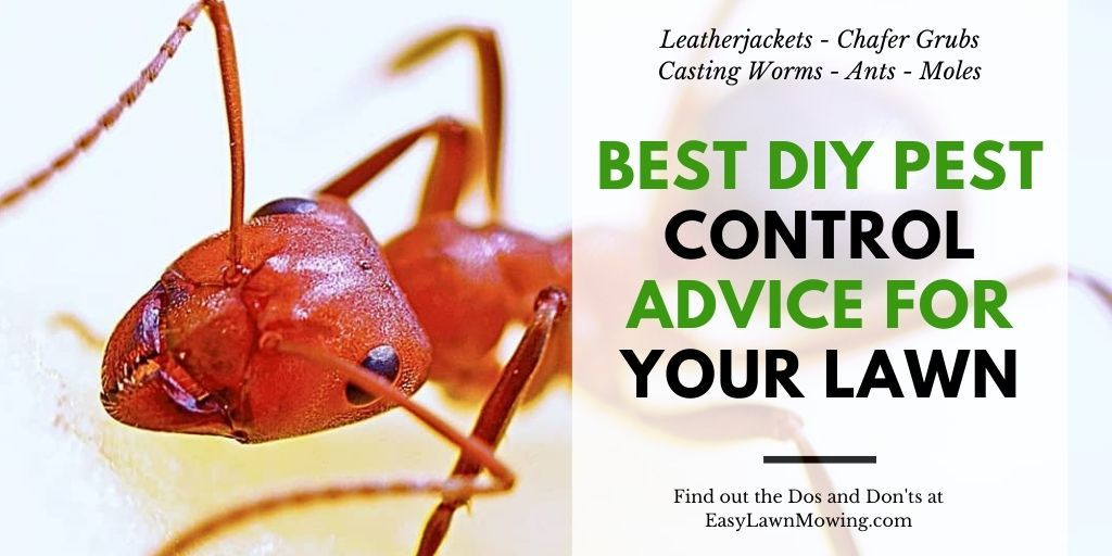Best DIY Pest Control Advice For Your Lawn