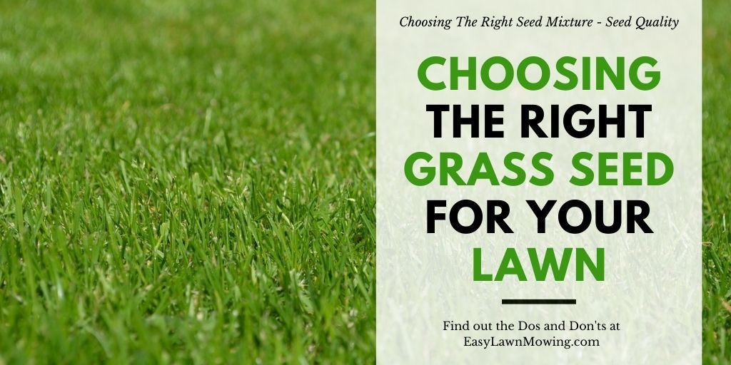 Choosing The Right Grass Seed For Your Lawn