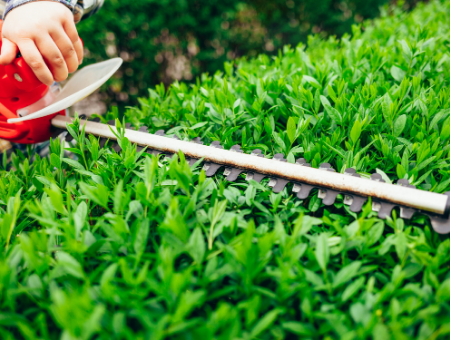 Best Cordless Hedge Trimmers – Buyer's Guide