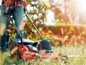 August Lawn Cutting