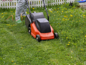 March First Lawn Mow