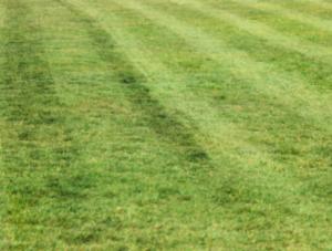 May Lawn Stripes